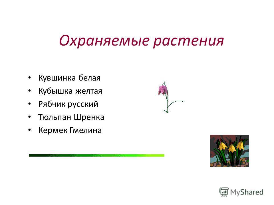Охраняемые растения Кувшинка белая Кубышка желтая Рябчик русский Тюльпан Шренка Кермек Гмелина