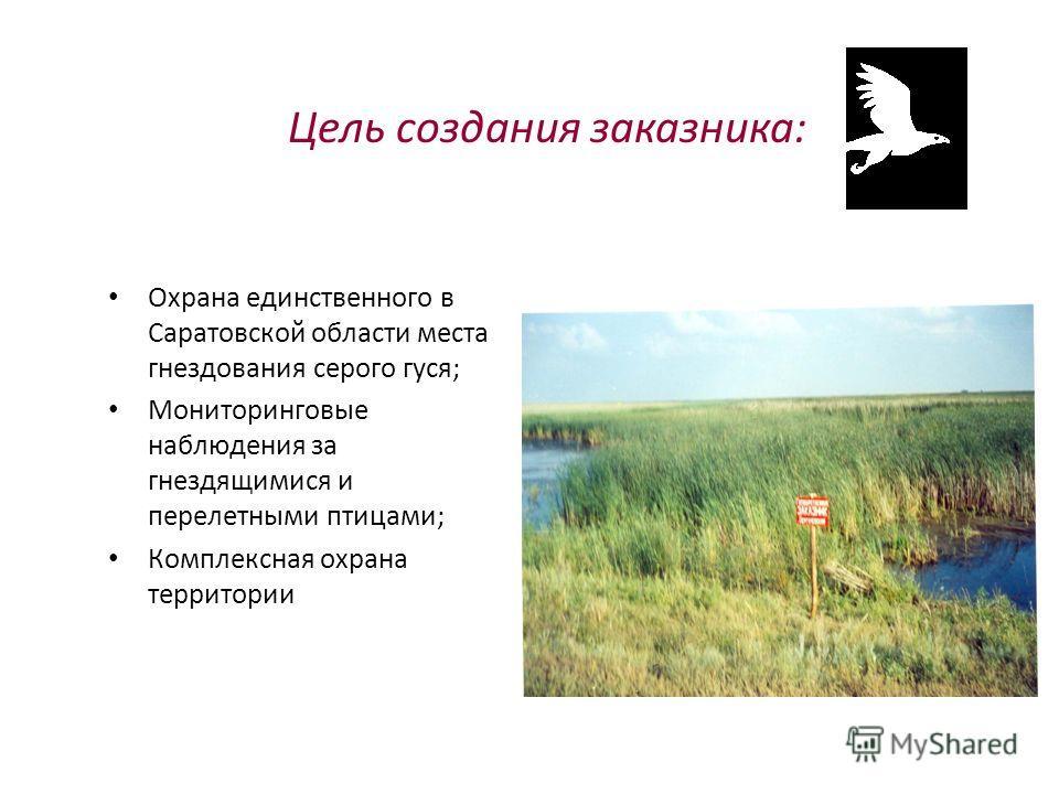 Цель создания заказника: Охрана единственного в Саратовской области места гнездования серого гуся; Мониторинговые наблюдения за гнездящимися и перелетными птицами; Комплексная охрана территории