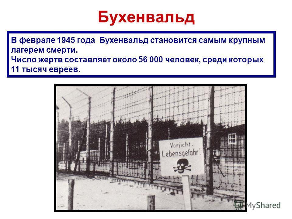 Бухенвальд В феврале 1945 года Бухенвальд становится самым крупным лагерем смерти. Число жертв составляет около 56 000 человек, среди которых 11 тысяч евреев.