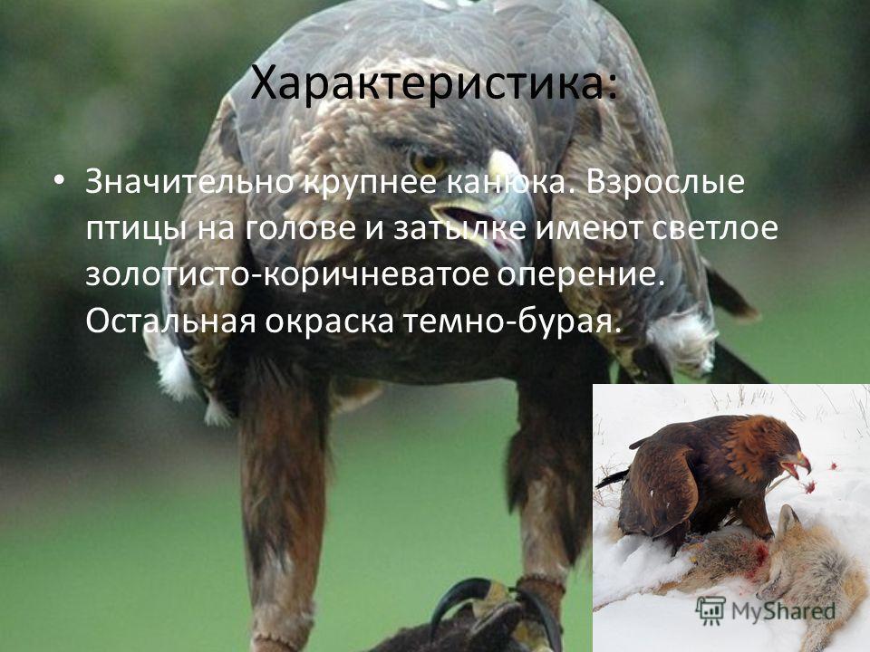 Характеристика: Значительно крупнее канюка. Взрослые птицы на голове и затылке имеют светлое золотисто-коричневатое оперение. Остальная окраска темно-бурая.