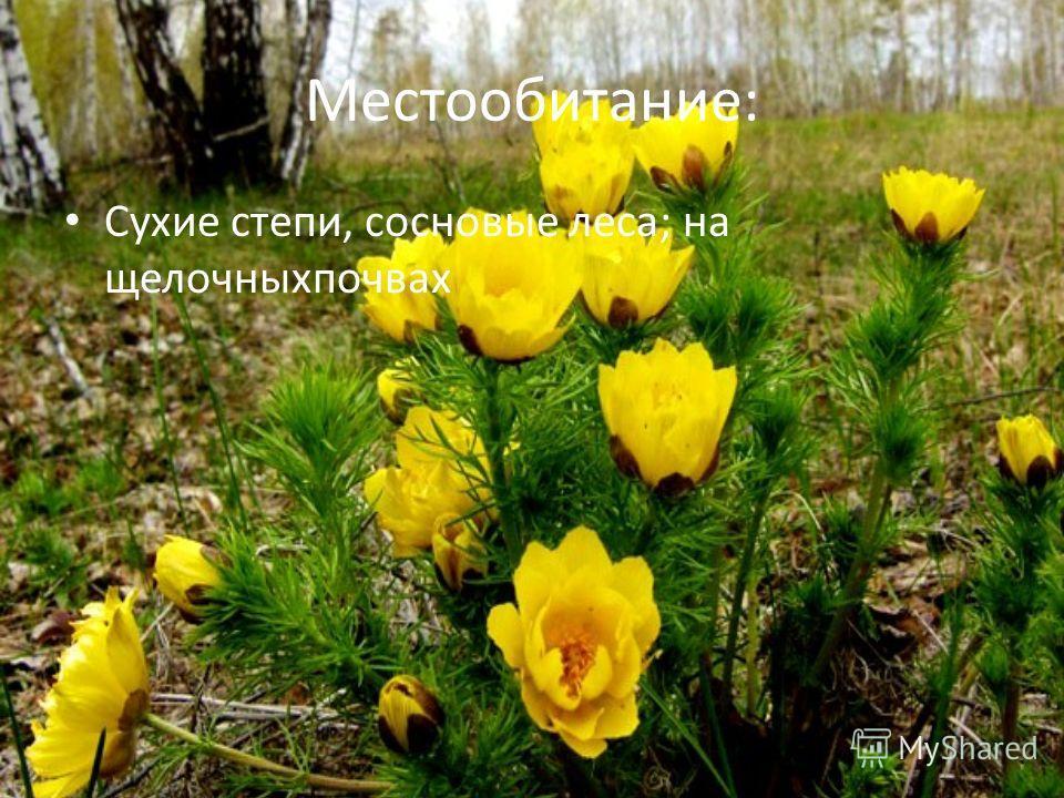 Местообитание: Сухие степи, сосновые леса; на щелочныхпочвах