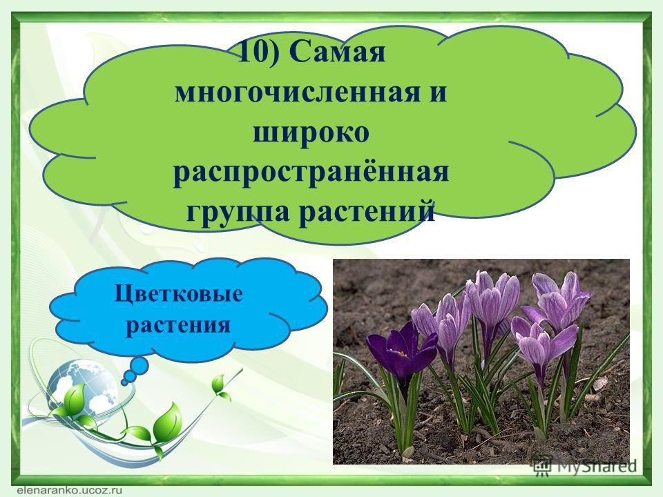 10) Самая многочисленная и широко распространённая группа растений Цветковые растения