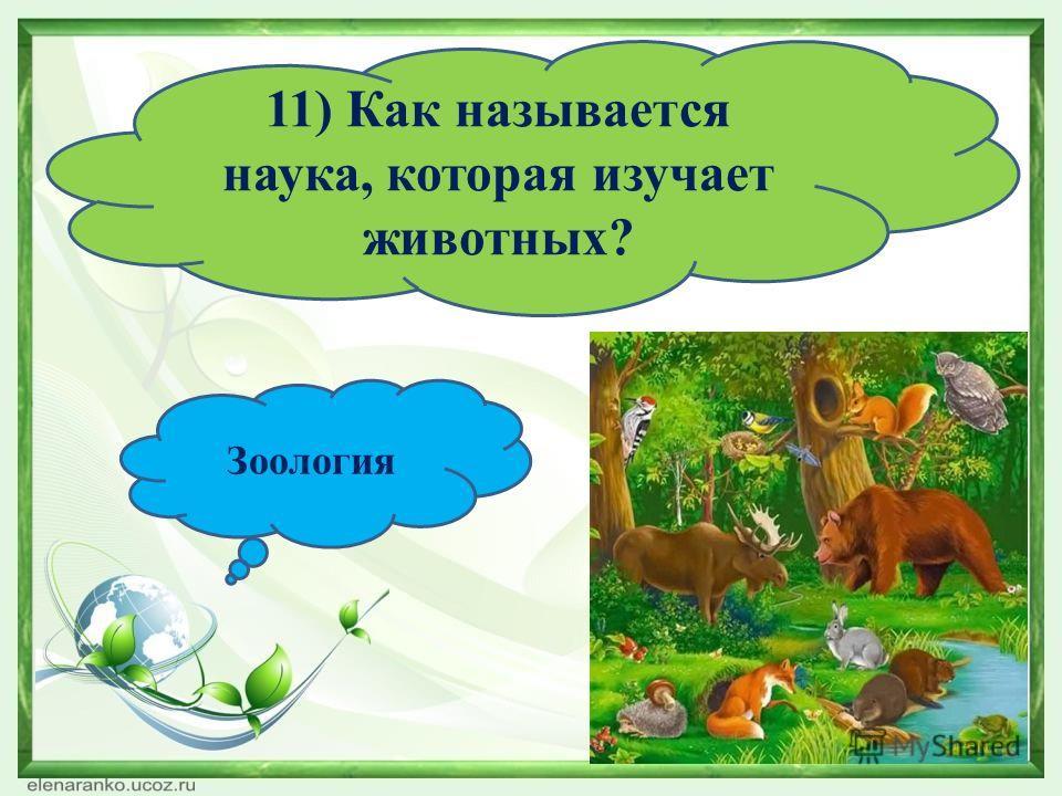 11) Как называется наука, которая изучает животных? Зоология