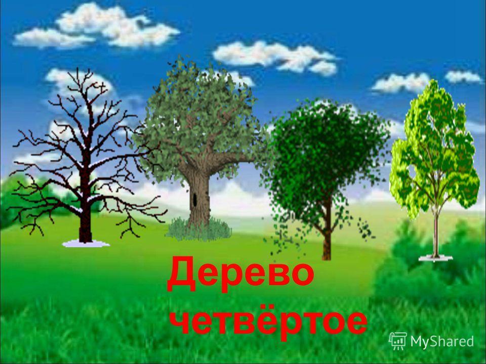Дерево четвёртое