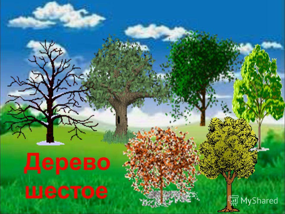 Дерево шестое
