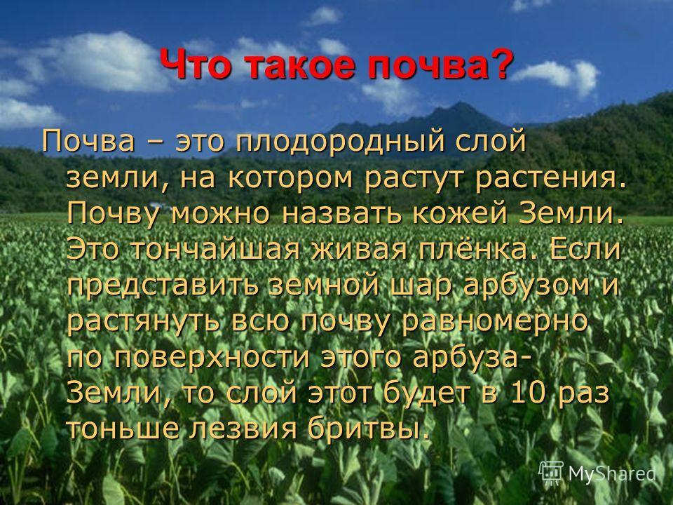 Что такое почва? Почва – это плодородный слой земли, на котором растут растения. Почву можно назвать кожей Земли. Это тончайшая живая плёнка. Если представить земной шар арбузом и растянуть всю почву равномерно по поверхности этого арбуза- Земли, то