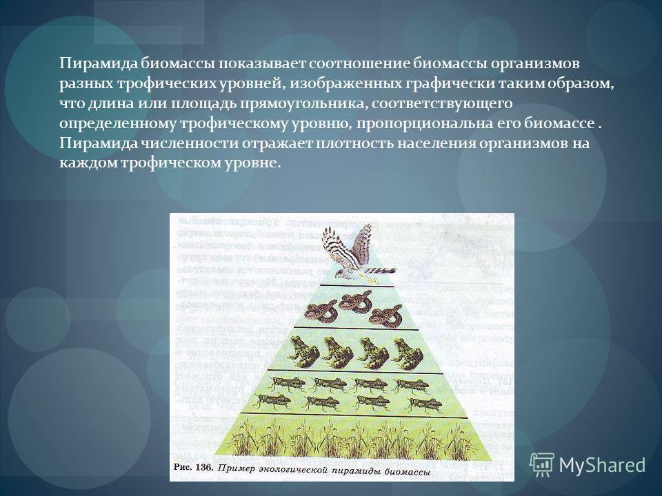 Пирамида биомассы показывает соотношение биомассы организмов разных трофических уровней, изображенных графически таким образом, что длина или площадь прямоугольника, соответствующего определенному трофическому уровню, пропорциональна его биомассе. Пи