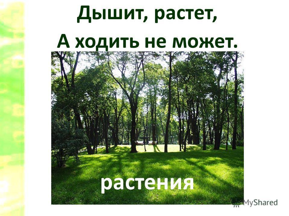Дышит, растет, А ходить не может. растения