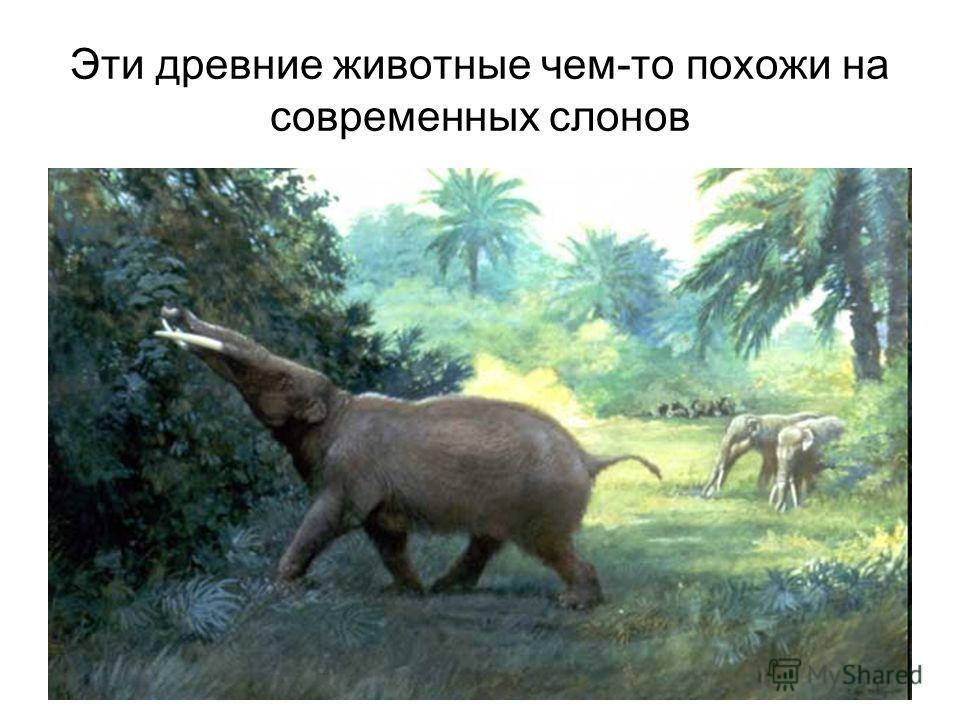 Доклад о древних животных 4484