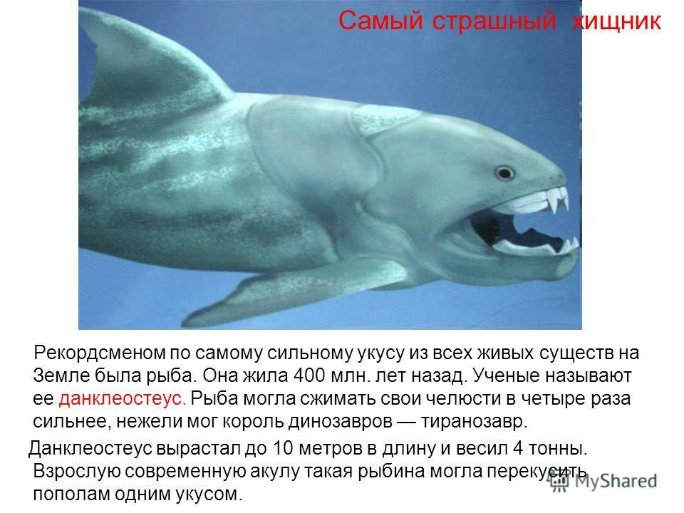 Доклад о древних животных 5164