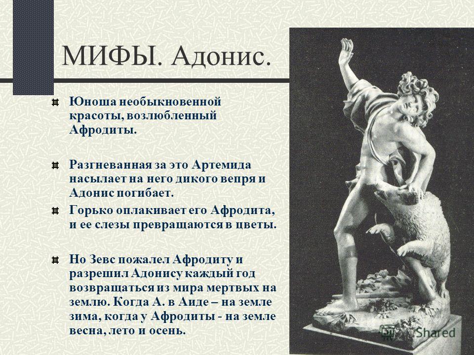 МИФЫ. Адонис. Юноша необыкновенной красоты, возлюбленный Афродиты. Разгневанная за это Артемида насылает на него дикого вепря и Адонис погибает. Горько оплакивает его Афродита, и ее слезы превращаются в цветы. Но Зевс пожалел Афродиту и разрешил Адон