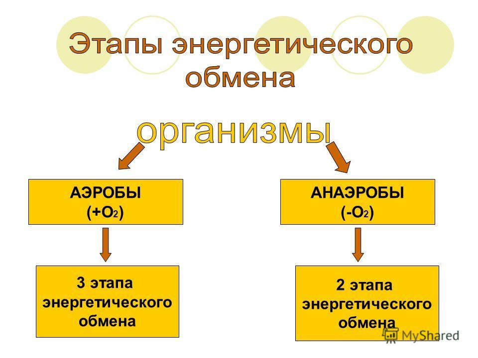 АЭРОБЫ (+О 2 ) АНАЭРОБЫ (-О 2 ) 3 этапа энергетического обмена 2 этапа энергетического обмена