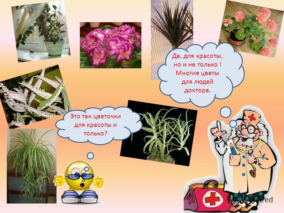 Это так цветочки для красоты и только? Да, для красоты, но и не только ! Многие цветы для людей доктора.