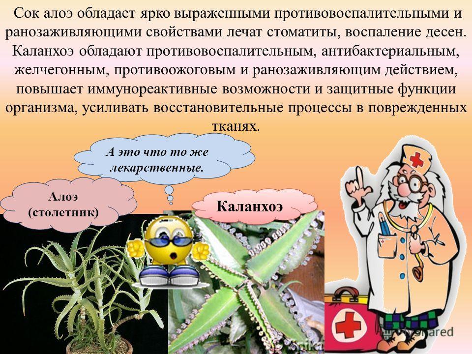А это что то же лекарственные. Алоэ (столетник) Каланхоэ Сок алоэ обладает ярко выраженными противовоспалительными и ранозаживляющими свойствами лечат стоматиты, воспаление десен. Каланхоэ обладают противовоспалительным, антибактериальным, желчегонны