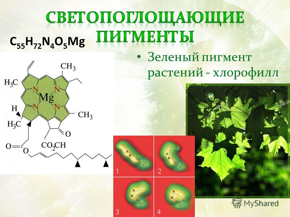 Зеленый пигмент растений - хлорофилл C 55 H 72 N 4 O 5 Mg