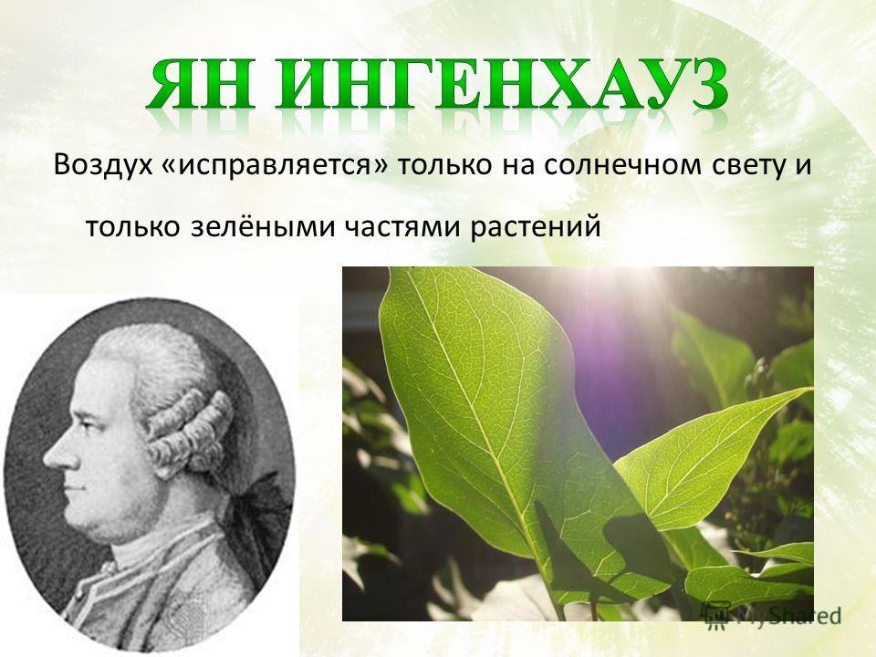 Воздух «исправляется» только на солнечном свету и только зелёными частями растений