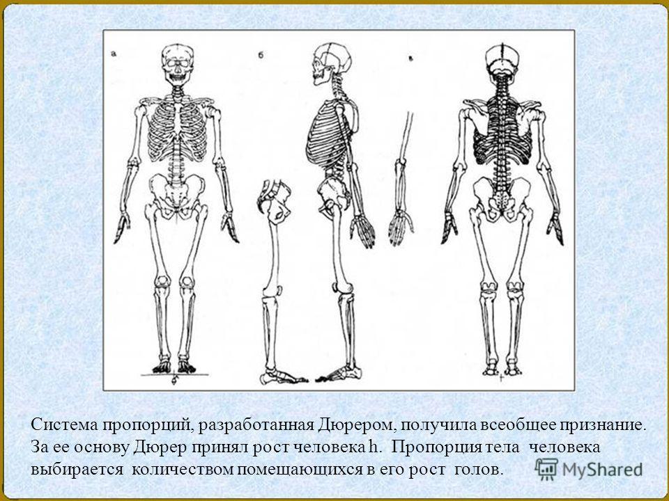 Система пропорций, разработанная Дюрером, получила всеобщее признание. За ее основу Дюрер принял рост человека h. Пропорция тела человека выбирается количеством помещающихся в его рост голов.