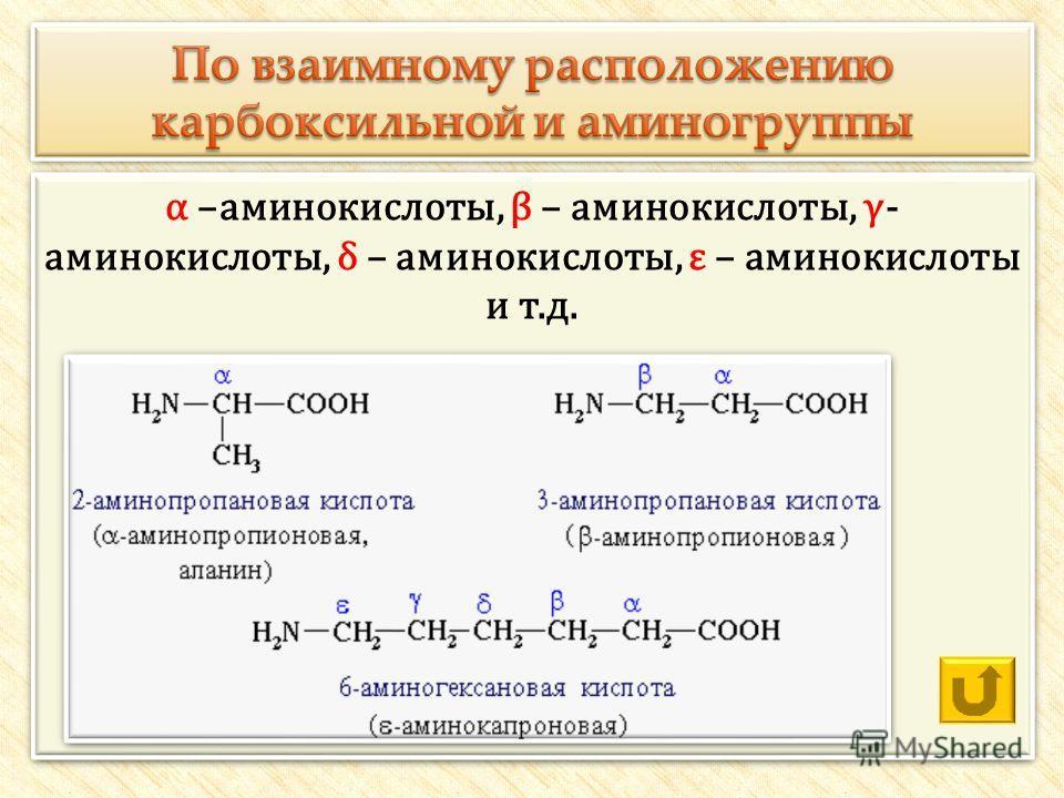 α –аминокислоты, β – аминокислоты, γ- аминокислоты, δ – аминокислоты, ε – аминокислоты и т.д.