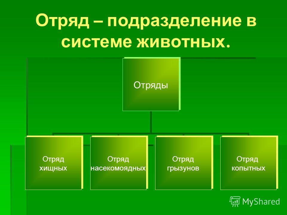 Отряды Отряд хищных Отряд насекомоядных Отряд грызунов Отряд копытных Отряд – подразделение в системе животных.