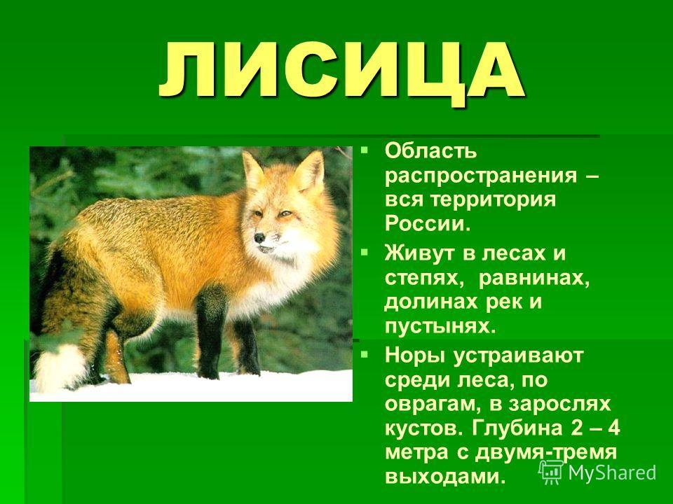 ЛИСИЦА Область распространения – вся территория России. Живут в лесах и степях, равнинах, долинах рек и пустынях. Норы устраивают среди леса, по оврагам, в зарослях кустов. Глубина 2 – 4 метра с двумя-тремя выходами.