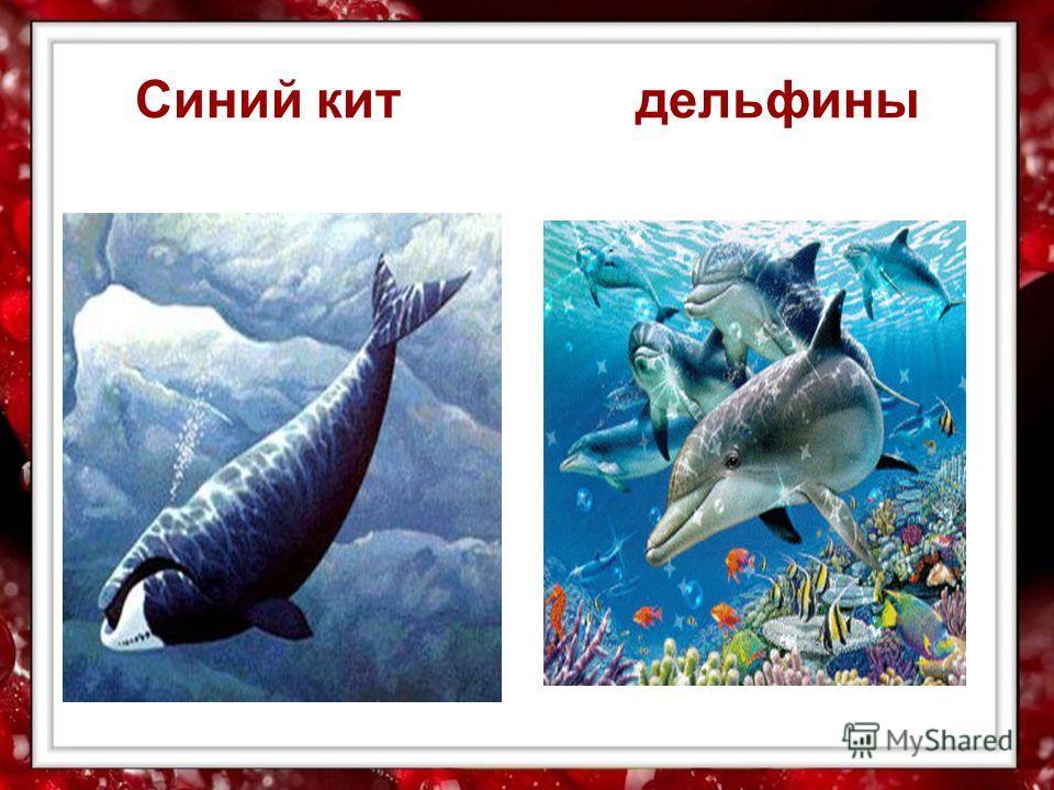 Синий кит дельфины