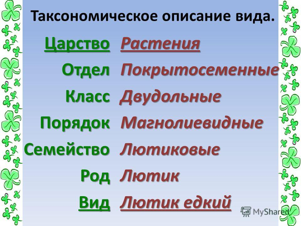 Таксономическое описание вида.