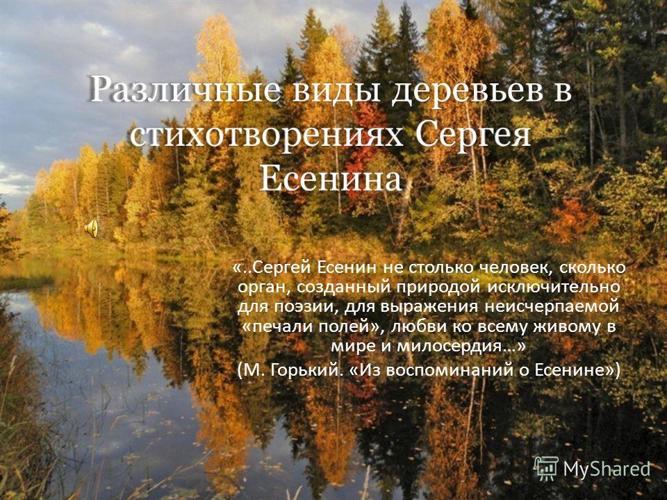 «..Сергей Есенин не столько человек, сколько орган, созданный природой исключительно для поэзии, для выражения неисчерпаемой «печали полей», любви ко всему живому в мире и милосердия…» (М. Горький. «Из воспоминаний о Есенине»)