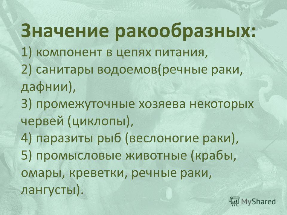 Значение ракообразных: 1) компонент в цепях питания, 2) санитары водоемов(речные раки, дафнии), 3) промежуточные хозяева некоторых червей (циклопы), 4) паразиты рыб (веслоногие раки), 5) промысловые животные (крабы, омары, креветки, речные раки, ланг