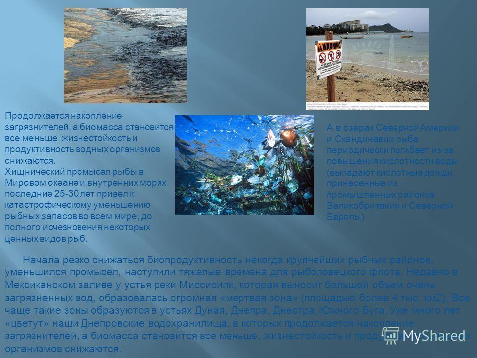 Начала резко снижаться биопродуктивность некогда крупнейших рыбных районов, уменьшился промысел, наступили тяжелые времена для рыболовецкого флота. Недавно в Мексиканском заливе у устья реки Миссисипи, которая выносит большой объем очень загрязненных