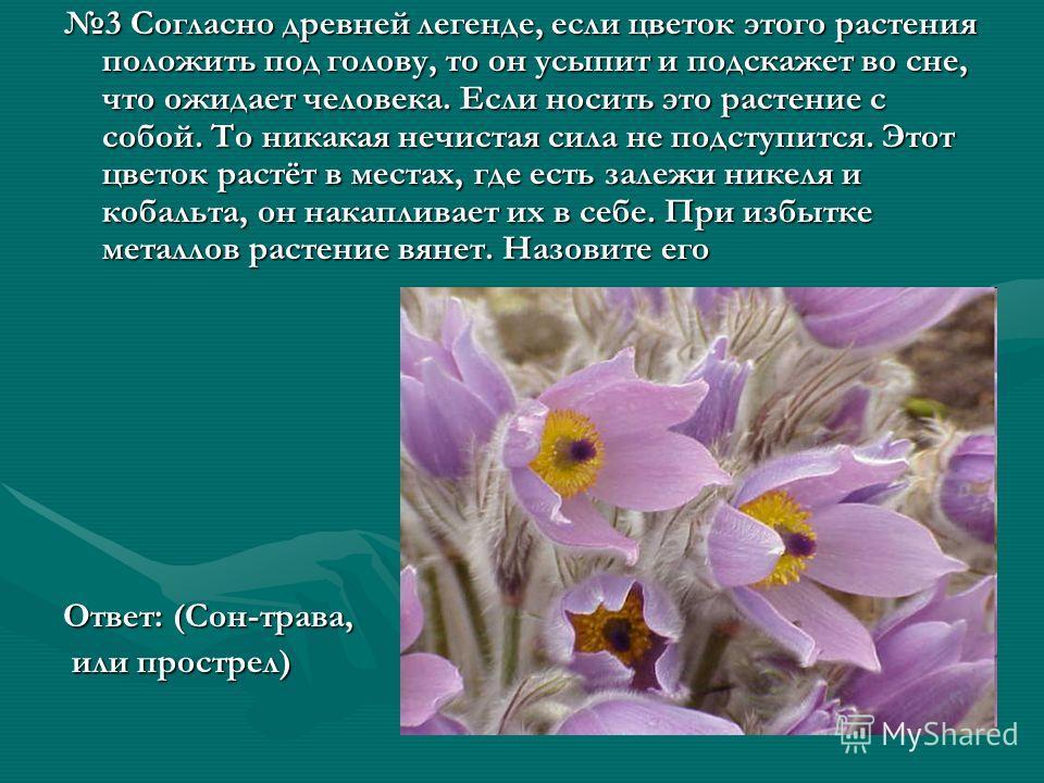 3 Согласно древней легенде, если цветок этого растения положить под голову, то он усыпит и подскажет во сне, что ожидает человека. Если носить это растение с собой. То никакая нечистая сила не подступится. Этот цветок растёт в местах, где есть залежи