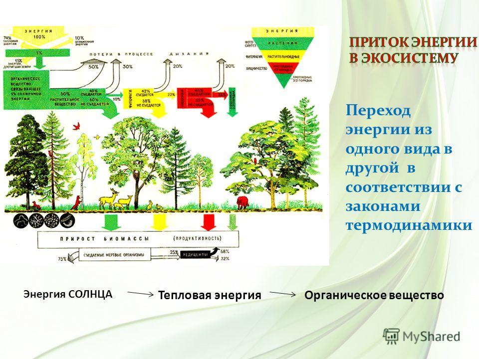 Переход энергии из одного вида в другой в соответствии с законами термодинамики Энергия СОЛНЦА Органическое веществоТепловая энергия Метаболическое тепло