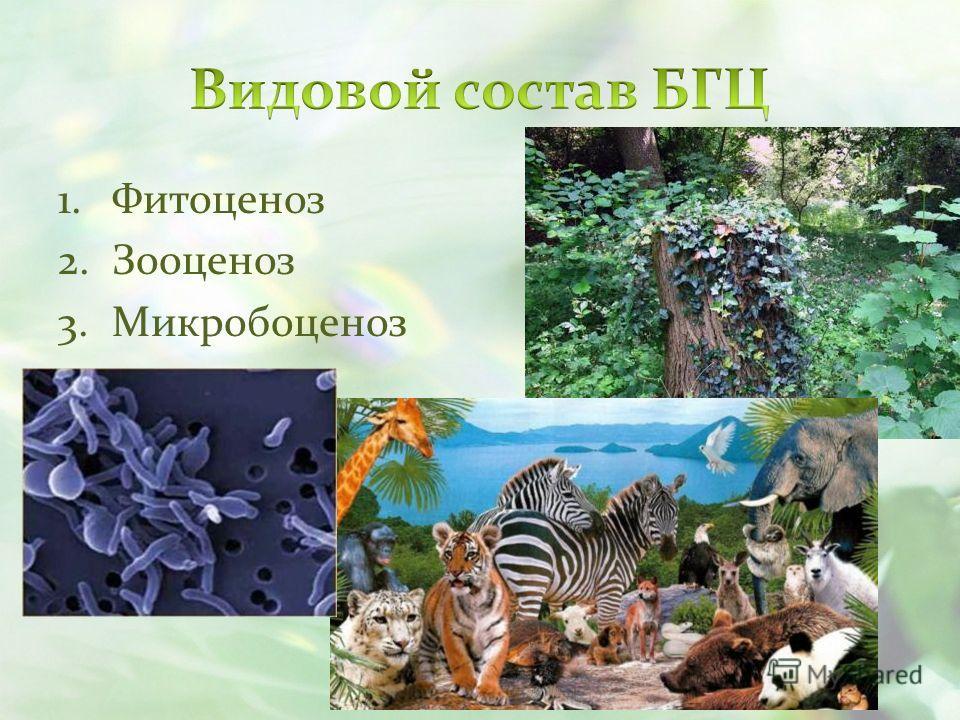 1.Фитоценоз 2.Зооценоз 3.Микробоценоз
