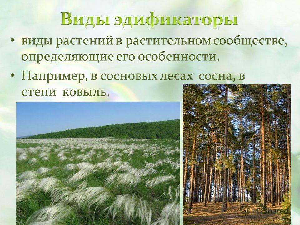 виды растений в растительном сообществе, определяющие его особенности. Например, в сосновых лесах сосна, в степи ковыль.