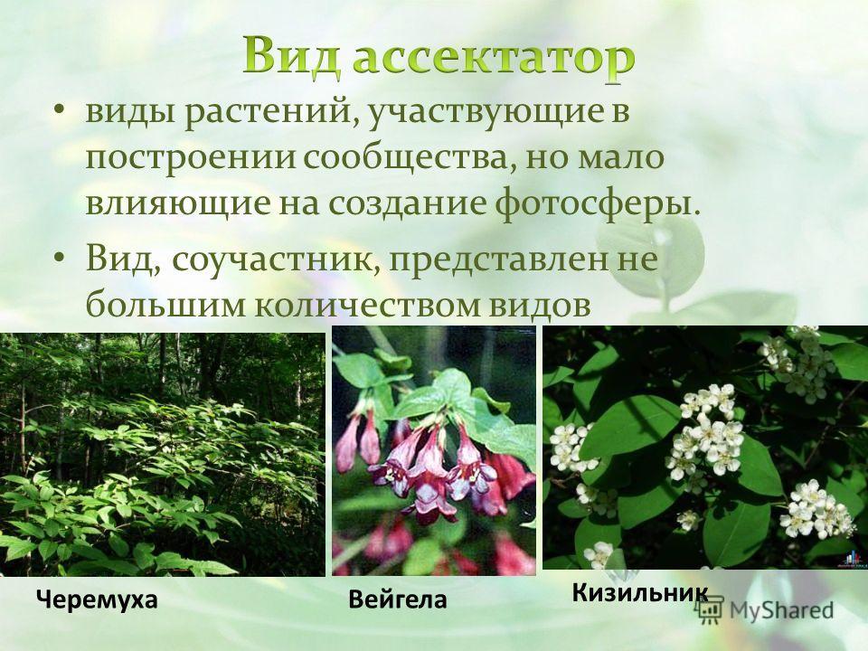 виды растений, участвующие в построении сообщества, но мало влияющие на создание фотосферы. Вид, соучастник, представлен не большим количеством видов ЧеремухаВейгела Кизильник