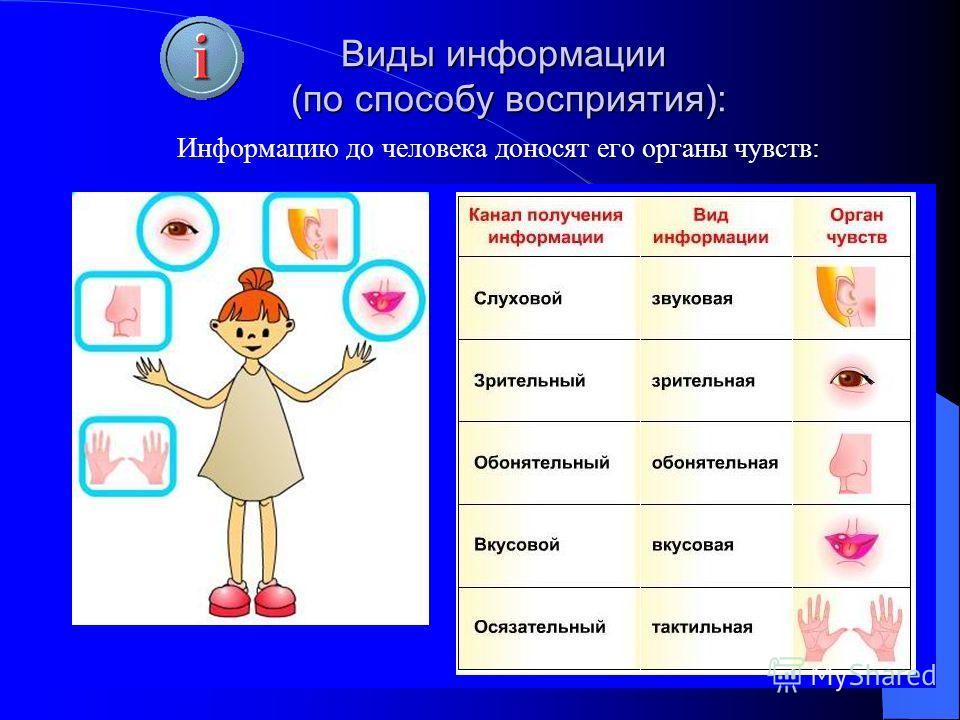 Информацию до человека доносят его органы чувств: Виды информации (по способу восприятия):