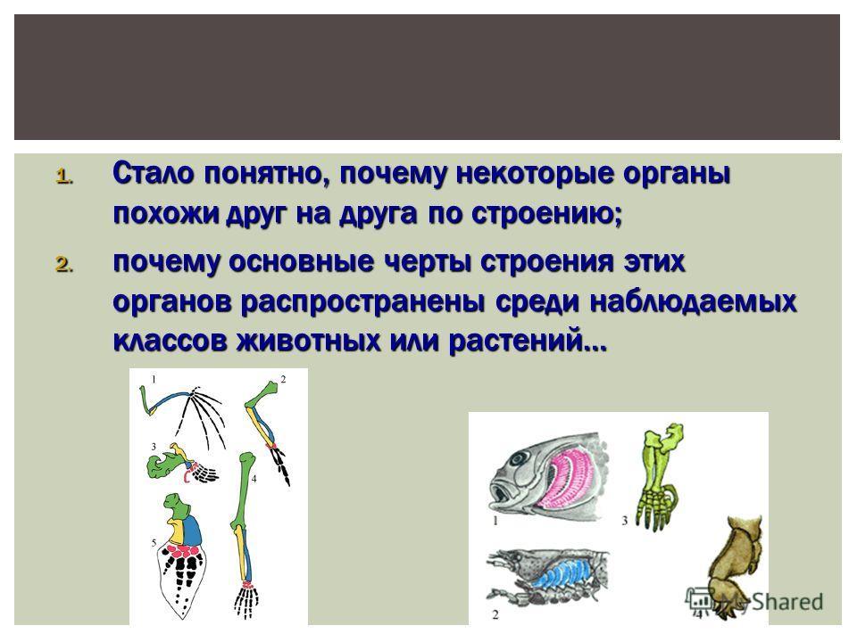 1. Стало понятно, почему некоторые органы похожи друг на друга по строению; 2. почему основные черты строения этих органов распространены среди наблюдаемых классов животных или растений…