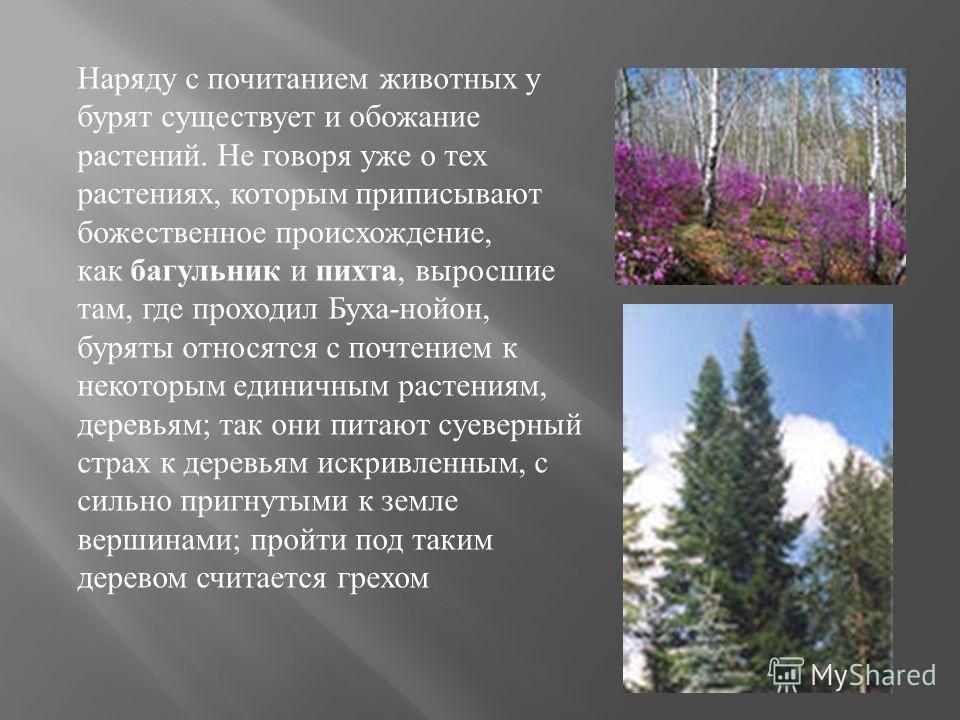 Наряду с почитанием животных у бурят существует и обожание растений. Не говоря уже о тех растениях, которым приписывают божественное происхождение, как багульник и пихта, выросшие там, где проходил Буха-нойон, буряты относятся с почтением к некоторым