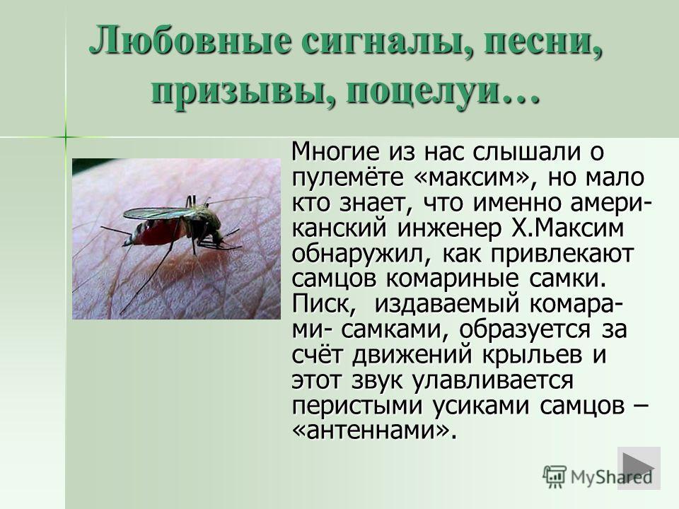 Любовные сигналы, песни, призывы, поцелуи… Многие из нас слышали о пулемёте «максим», но мало кто знает, что именно амери- канский инженер Х.Максим обнаружил, как привлекают самцов комариные самки. Писк, издаваемый комара- ми- самками, образуется за