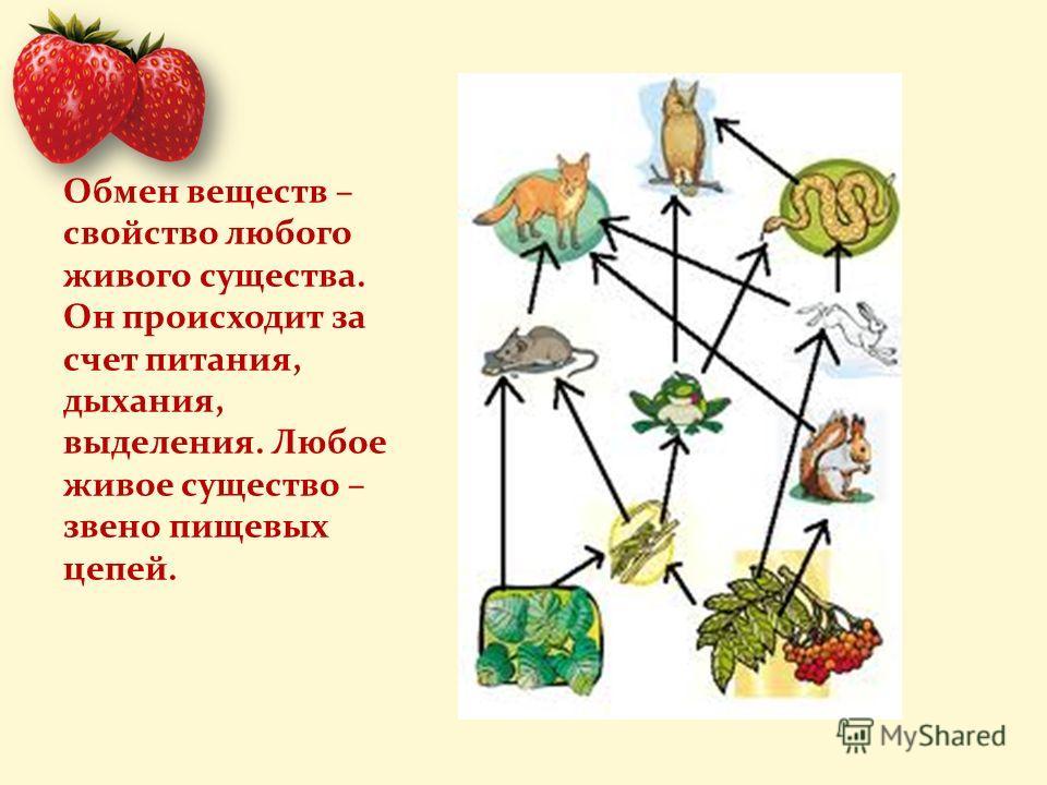 Обмен веществ – свойство любого живого существа. Он происходит за счет питания, дыхания, выделения. Любое живое существо – звено пищевых цепей.