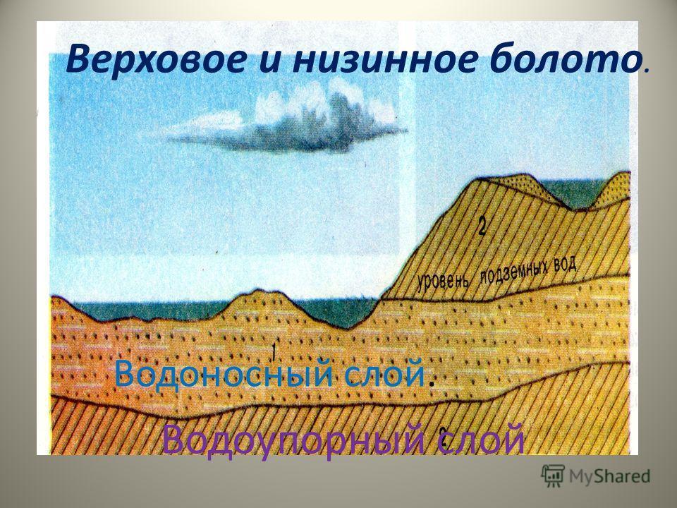 Где в России особенно много болот? Попробуйте назвать причины образования болот Где в России особенно много болот? Попробуйте назвать причины образования болот