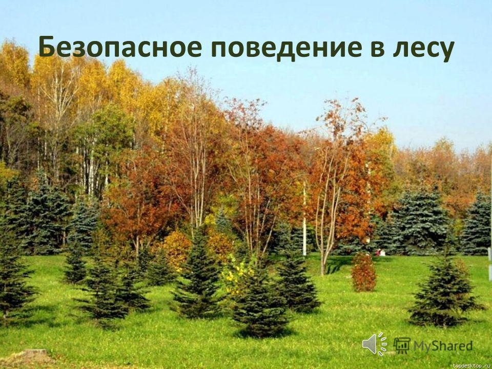 Безопасное поведение в лесу