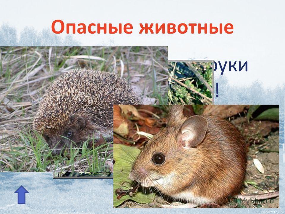 Опасные животные Никогда не бери в руки лесных жителей! Они могут быть источниками заразных болезней.