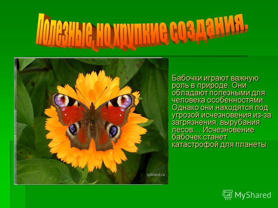 Бабочки играют важную роль в природе. Они обладают полезными для человека особенностями. Однако они находятся под угрозой исчезновения из-за загрязнения, вырубания лесов… Исчезновение бабочек станет катастрофой для планеты. Бабочки играют важную роль