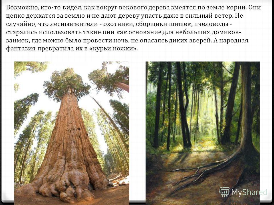 Возможно, кто-то видел, как вокруг векового дерева змеятся по земле корни. Они цепко держатся за землю и не дают дереву упасть даже в сильный ветер. Не случайно, что лесные жители - охотники, сборщики шишек, пчеловоды - старались использовать таки