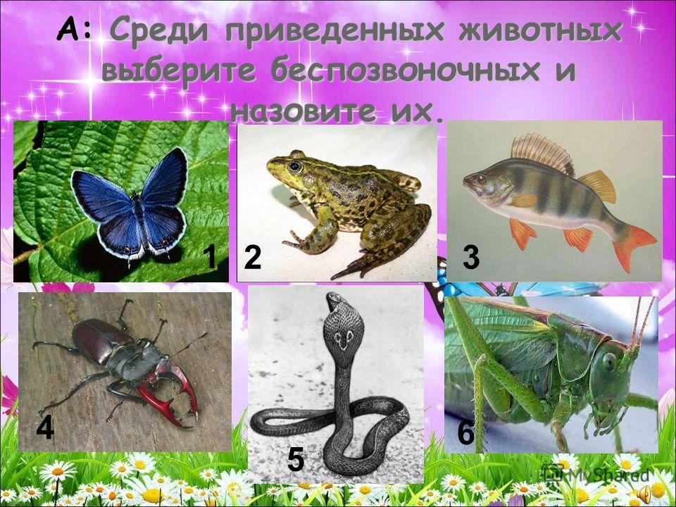 А: Среди приведенных животных выберите беспозвоночных и назовите их. 1 23 4 5 6
