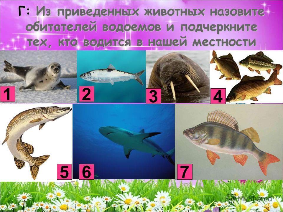 Г: Из приведенных животных назовите обитателей водоемов и подчеркните тех, кто водится в нашей местности 12 3 5 4 76