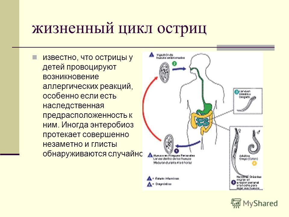 глисты острицы лечение таблетки