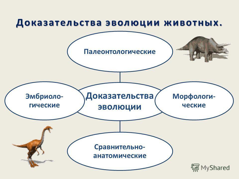 Доклад об эволюции животных 5193