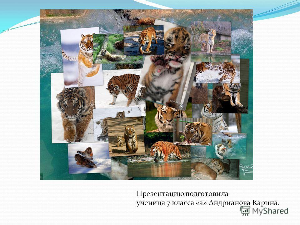Презентацию подготовила ученица 7 класса «а» Андрианова Карина.