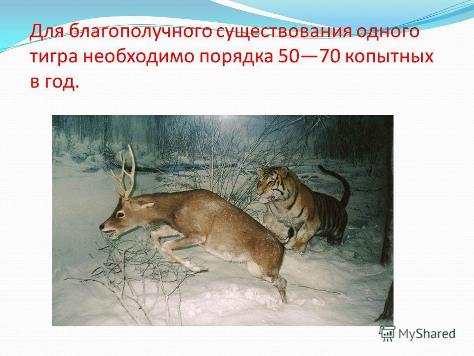 Для благополучного существования одного тигра необходимо порядка 5070 копытных в год.